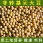豆制品厂供应黄豆东北黑龙江非转基因大豆 腐竹专用豆浆专用